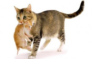 Catmother_1250043i